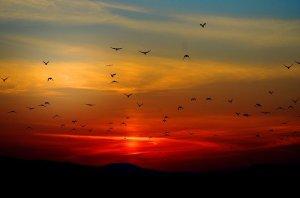 wilde vogels